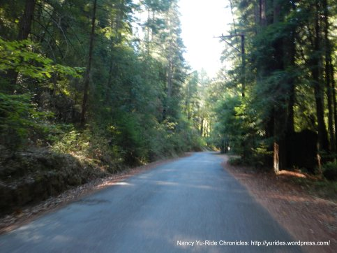 through the dense redwoods