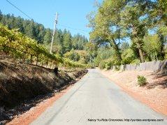 narrow road hrough vineyards
