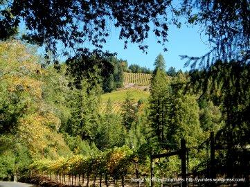 beautiful vineyards