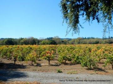 Dry Creek Valley vineyards