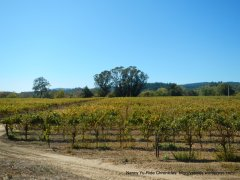 Dry Creek vineyards