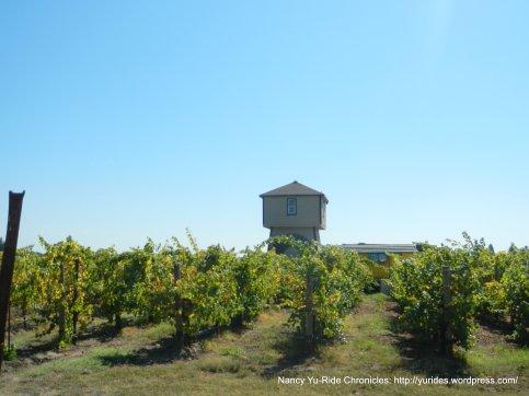 Russian River vineyard