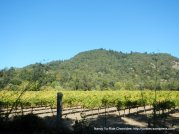 Russian River vineyards