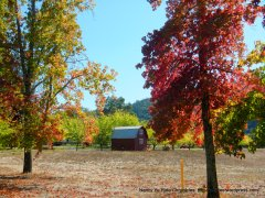 rich autumn colors