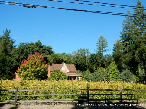 Fitch Mountain vineyard