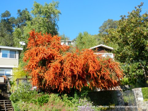 vibrant red/orange