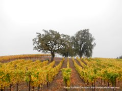 gorgeous vines