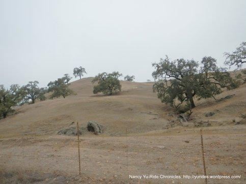 oak studded hillsides