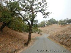 gentle terrain-single lane road