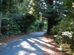 redwood groves