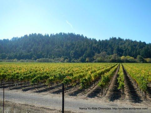 Korbel vineyards