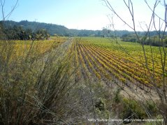 colorful vines lining the valley floor