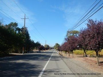 Old Redwood Hwy-Windsor