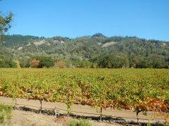 Oat Valley vineyards