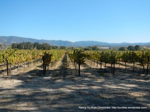 Sanel Valley vineyards