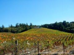 beautiful fall vines