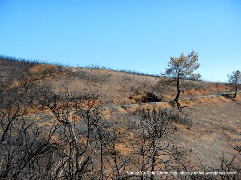 charred landscape
