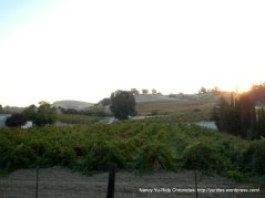Viano Winery & Vineyard