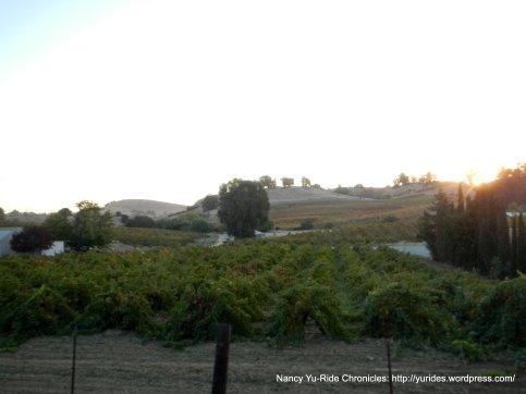Viano Winery & Vineyard