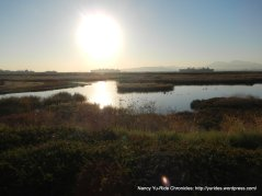 wetlands/marshes