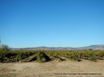Suisun Valley vineyards