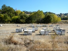 bee hives farm