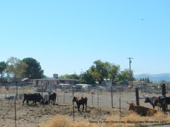 cattle ranch