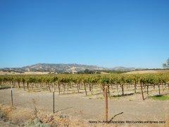 valley vines