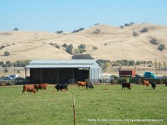 cattle ranch off Cherry Glen Rd