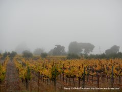 Carneros Valley vines