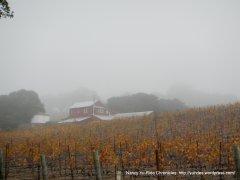 dense fog-hillside vineyard