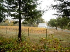 redwood rd vineyard