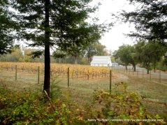 redwood rd vineyard