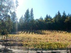 Mt Veeder vineyards