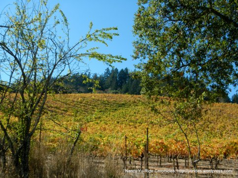 Mt Veeder vineyards