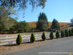 Congress valley vines