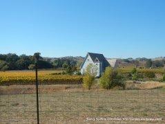 Congress Valley vineyard