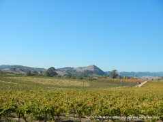 view of Carneros Valley