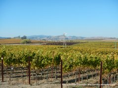 gorgeous Carneros Valley