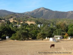 horse ranches at the foothills of Diablo
