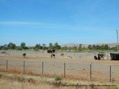 horse boarding facility