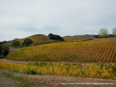 gorgeous hillside vineyards