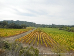 gorgeous Russian River Valley