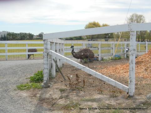emu ranch