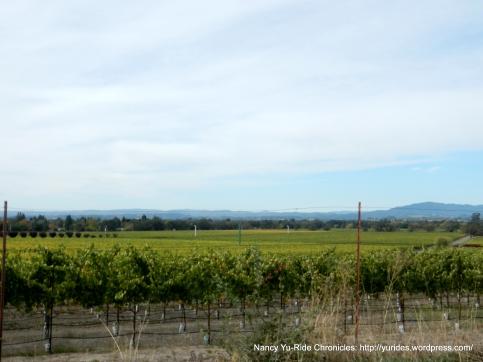 beautiful valley vineyards