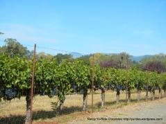 fruitful vines