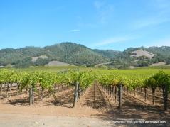 valley vineyards-mountain views