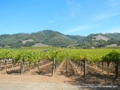 valley vineyards-mountain views