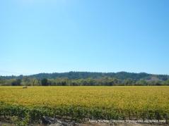vibrant vines