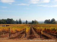 golden hues-autumn colors
